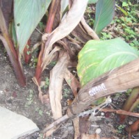 Saving Canna -- Part 1