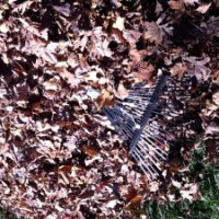 Zen And The Art Of Raking