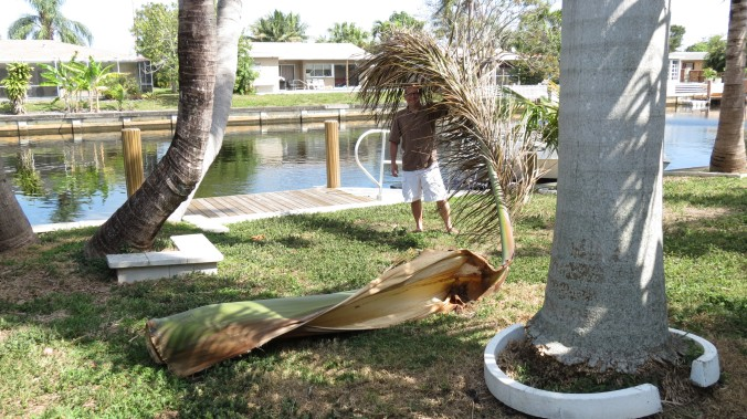 Royal Palm Frond