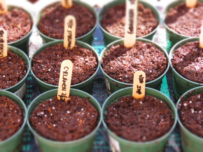 Seed Starting 6
