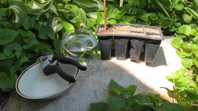 Hydrangea Propagation Tools