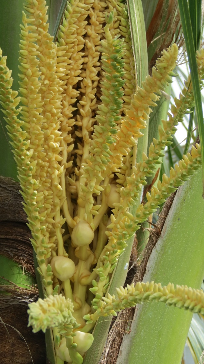 Inflorescence Yellow