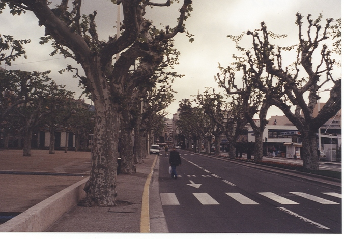On one of my first trip to Europe, I was intrigued at the pruning of trees -- a style I  had not really seen on Long Island.  This is a street in Cannes.
