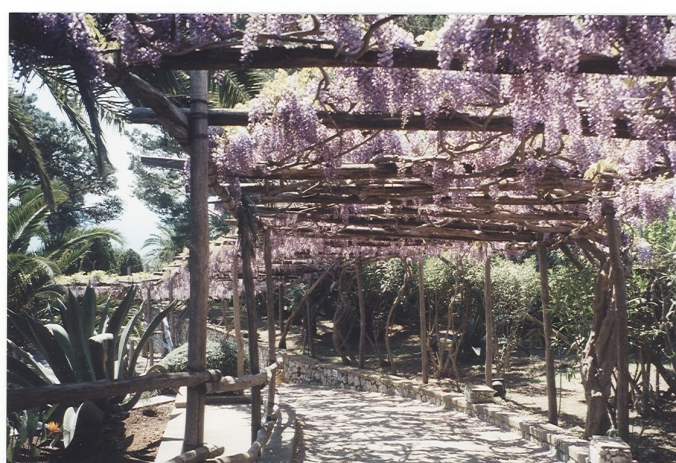 While strolling around Capri, we made a few turns and were surprised to find this arbor covered in wisteria.  I like the inviting mystery of what could be at the end of he path.