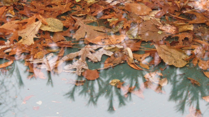 A few days ago, these leaves on the pool cover were encased in ice.