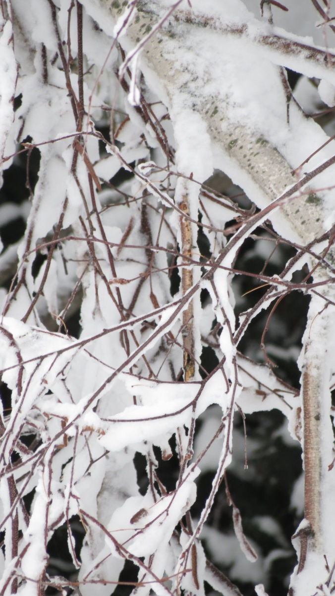 White Birch branches, encased.