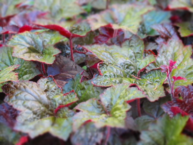 Heuchera.  It's all about the foliage.