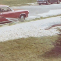 Repost: Nana's Tree, 1966 - 2013