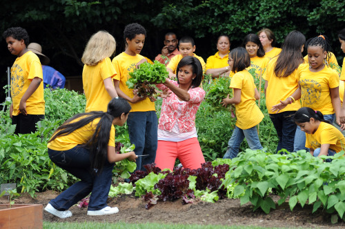 First Lady Michelle Obama works lends a hand in the White House vegetable garden. Courtesy of Baltimore Sun.