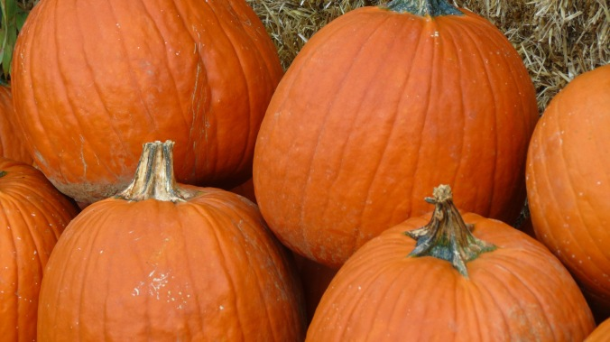 """I would rather sit on a pumpkin, and have it all to myself, than be crowded on a velvet cushion."" -- Henry David Thoreau"