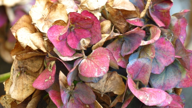 Every garden should have hydrangeas for no-matter-the-season interest.