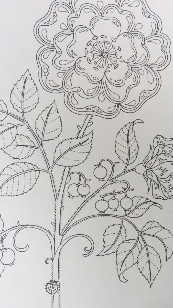 secret garden ngdm you designed the book to be a coloringactivity book for adults and children alike but i have a confession to make - My Secret Garden Coloring Book