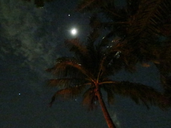 Palm Tree Night