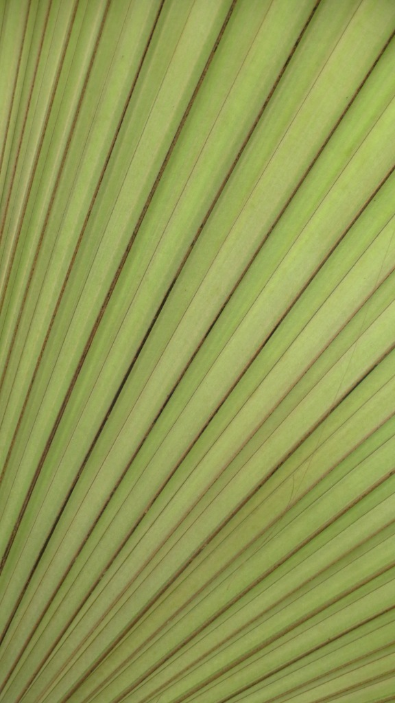 """Tucked"" into one of the front beds is a very large palm.  Lit from behind, the frond looked more Art Deco than leaf."