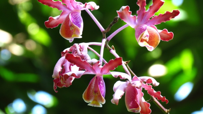 Orchids are everywhere: up, down, and all around.