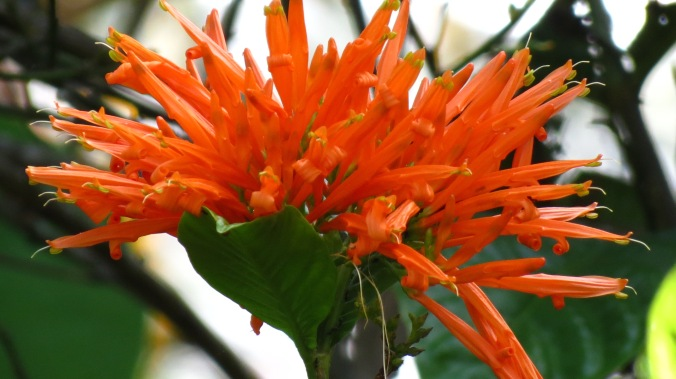 I'm not sure of the name of this flower, but the orange blossom offered a bright spot.