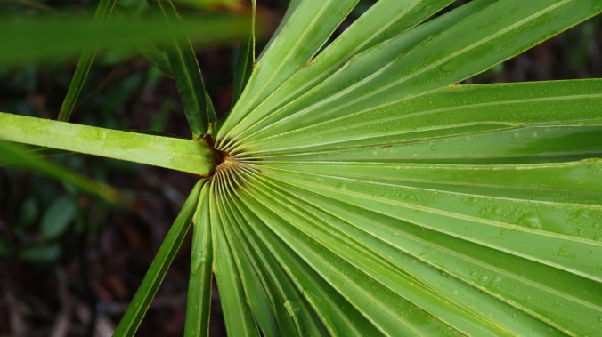 Lakeside Sand Pine Preserve