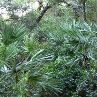Field Trip: Lakeside Sand Pine Preserve