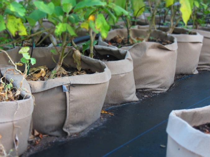 Felt Grow Bags