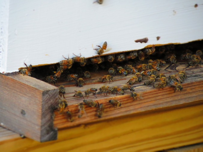 Bees not only work on the farm, but also produce local honey.