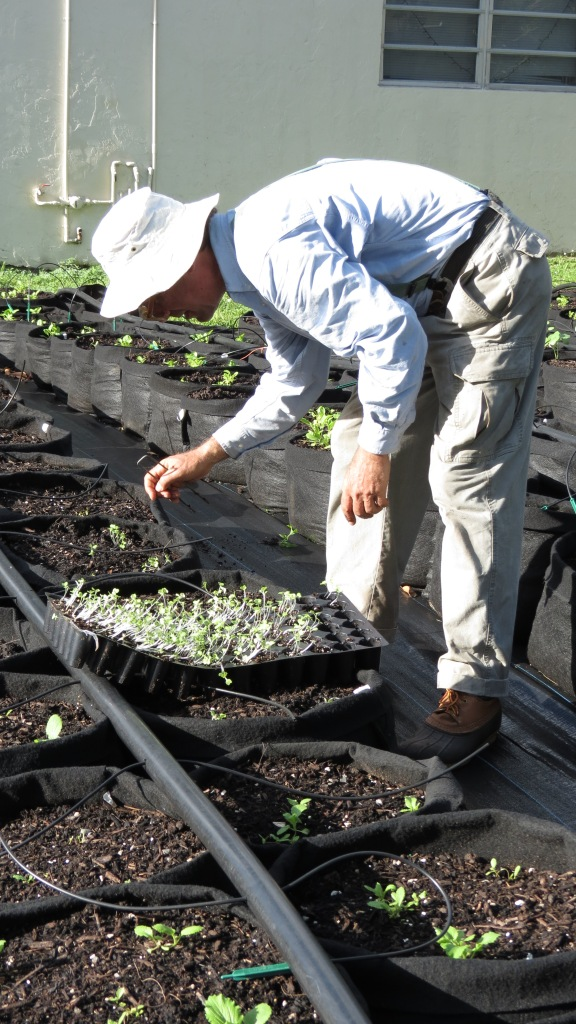 After my tour, Michael Madfis returned to his work, planting young seedlings, five to a container.