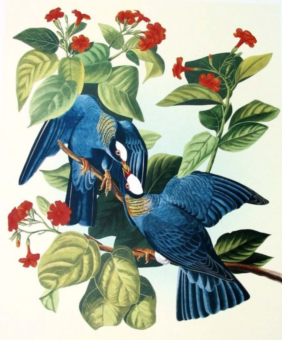 Courtesy of www.audubon-art.com.