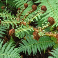 The Art Of Fern Dancing