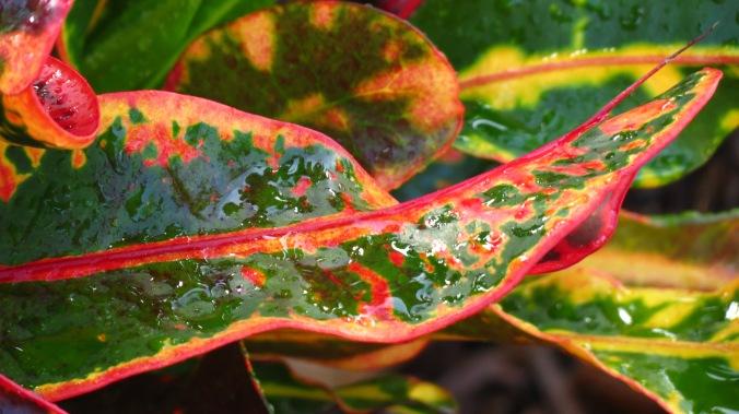 Rain on Croton