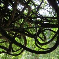 Field Trip: Sunken Gardens